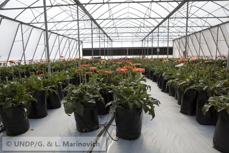Rehoboth Greenhouse Development