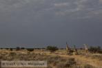 Namib-Kalahari